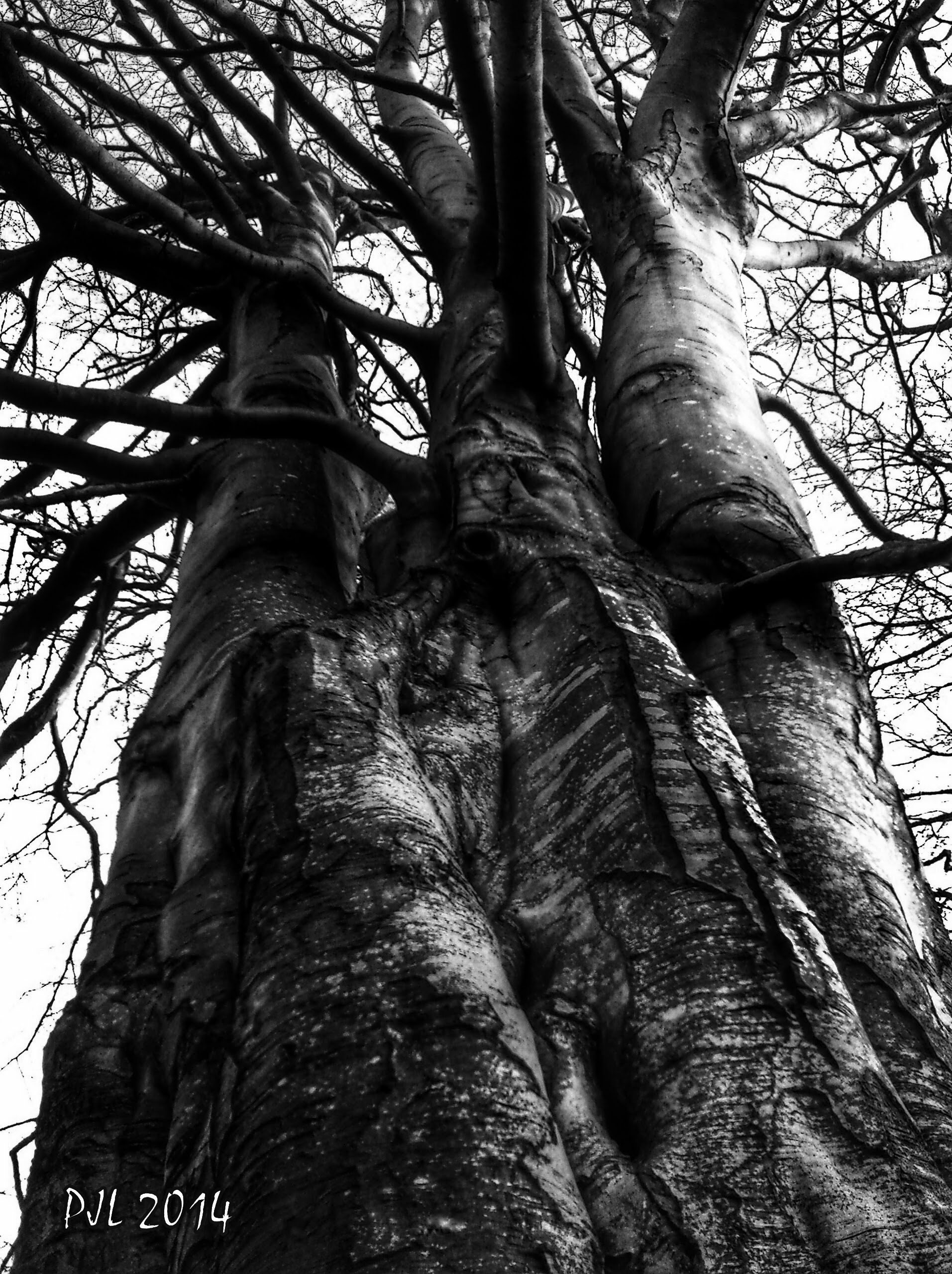 'Anchored By Skilful Roots' (B&W)