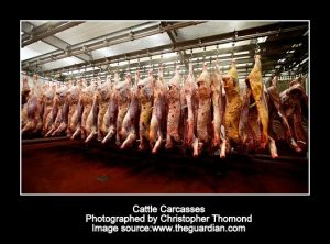 cattle-carcasses